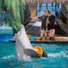 Дельфинарии, океанариумы в Дмитрове