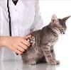 Ветеринарные клиники в Дмитрове